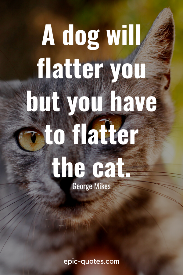 """""""A dog will flatter you but you have to flatter the cat."""" -George Mikes"""