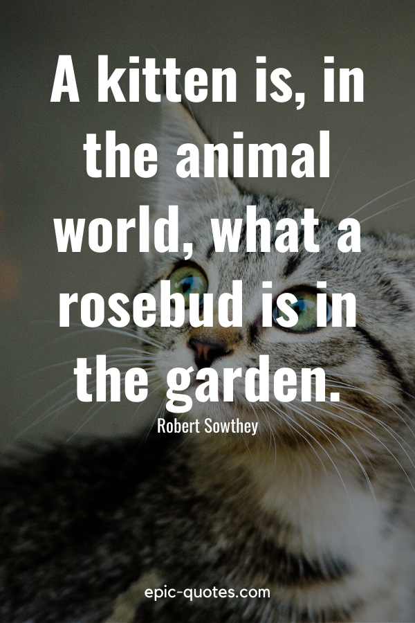 """""""A kitten is, in the animal world, what a rosebud is in the garden."""" -Robert Sowthey"""