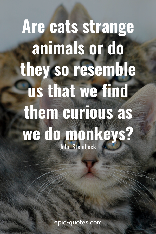 """""""Are cats strange animals or do they so resemble us that we find them curious as we do monkeys"""" -John Steinbeck"""