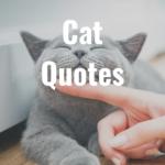 44 Cat Quotes