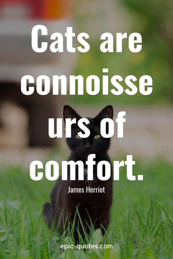 """Cats are connoisseurs of comfort."" -James Herriot"