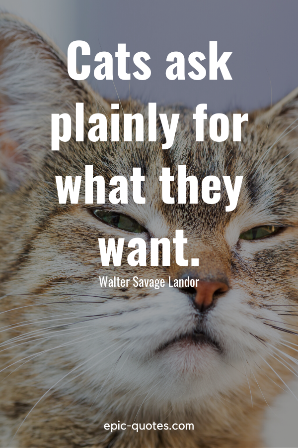 """""""Cats ask plainly for what they want."""" -Walter Savage Landor"""