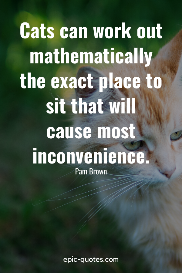 """""""Cats can work out mathematically the exact place to sit that will cause most inconvenience."""" -Pam Brown"""