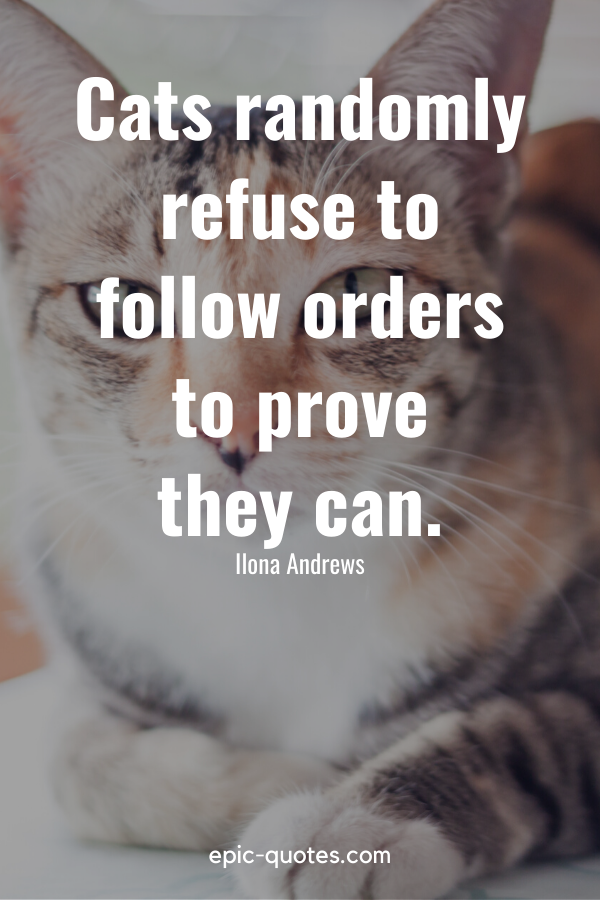 """""""Cats randomly refuse to follow orders to prove they can."""" -Ilona Andrews"""