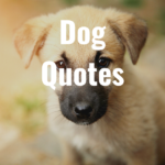 33 Dog Quotes