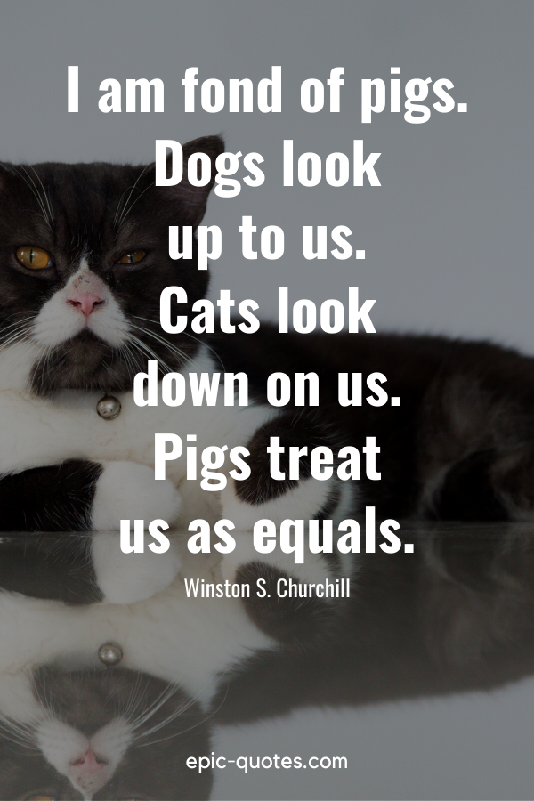 """""""I am fond of pigs. Dogs look up to us. Cats look down on us. Pigs treat us as equals."""" -Winston S. Churchill"""