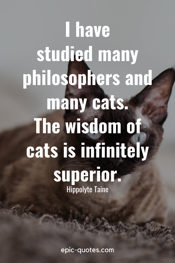 """""""I have studied many philosophers and many cats. The wisdom of cats is infinitely superior."""" -Hippolyte Taine"""