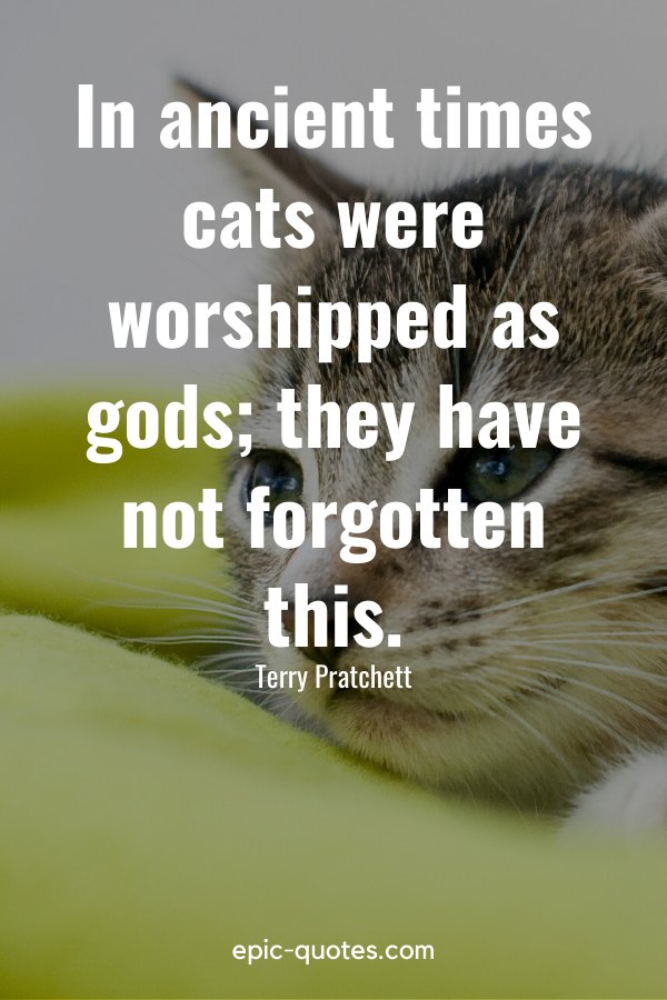 """""""In ancient times cats were worshipped as gods; they have not forgotten this."""" -Terry Pratchett"""