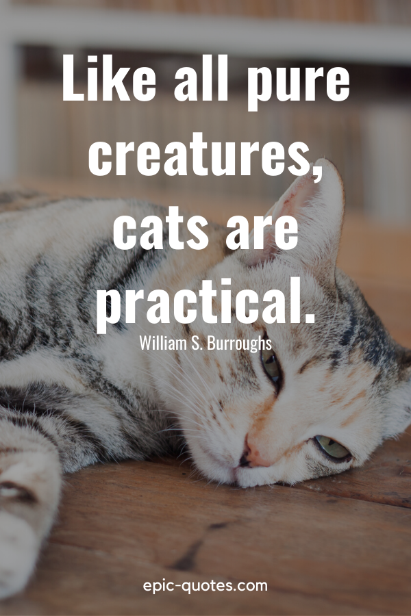 """""""Like all pure creatures, cats are practical."""" -William S. Burroughs"""
