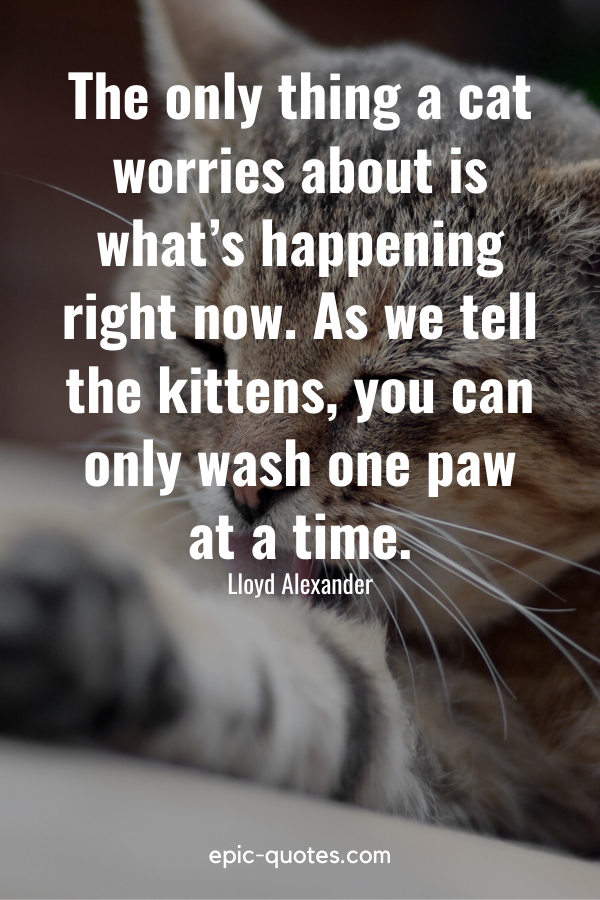 """""""The only thing a cat worries about is what's happening right now. As we tell the kittens, you can only wash one paw at a time."""" -Lloyd Alexander"""
