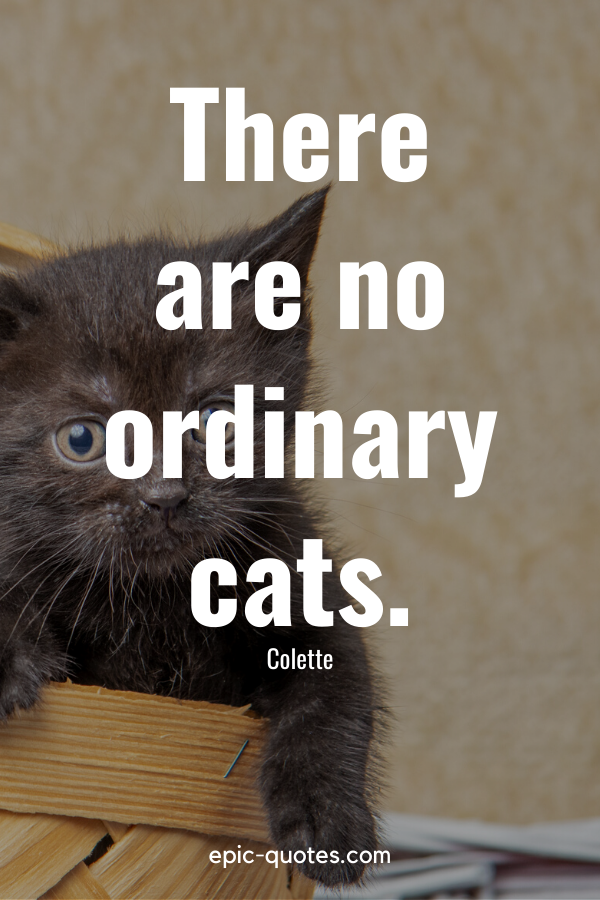 """""""There are no ordinary cats."""" -Colette"""