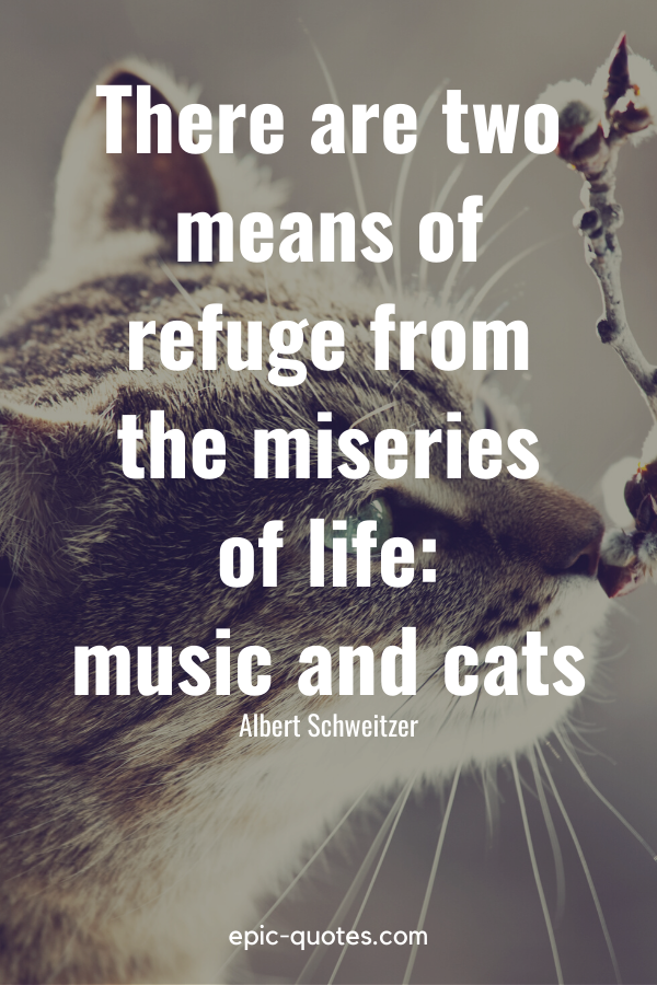 """""""There are two means of refuge from the miseries of life music and cats."""" -Albert Schweitzer"""