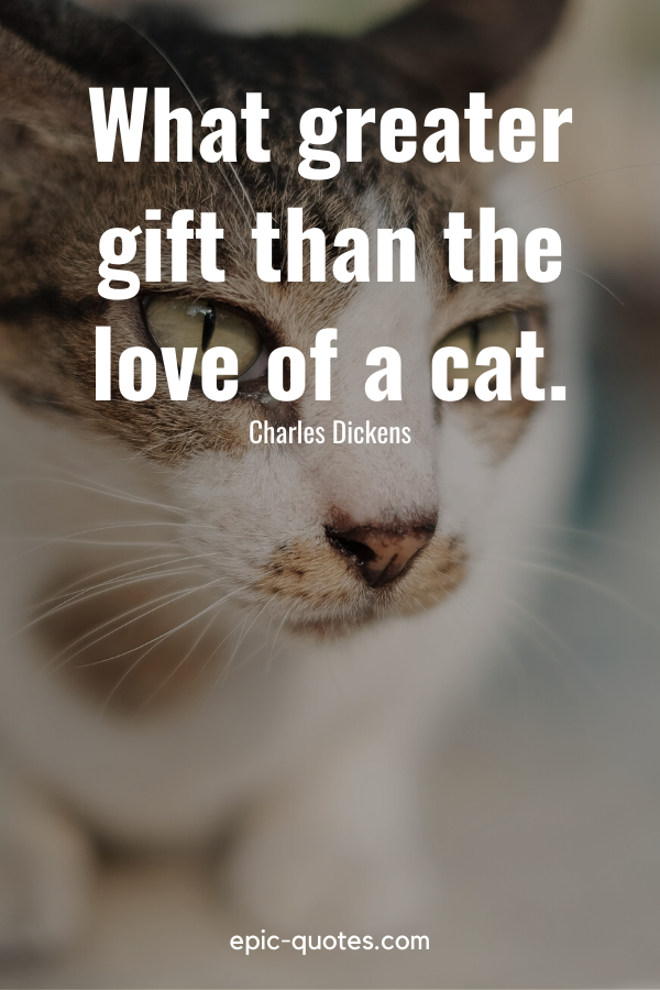 """""""What greater gift than the love of a cat."""" -Charles Dickens"""
