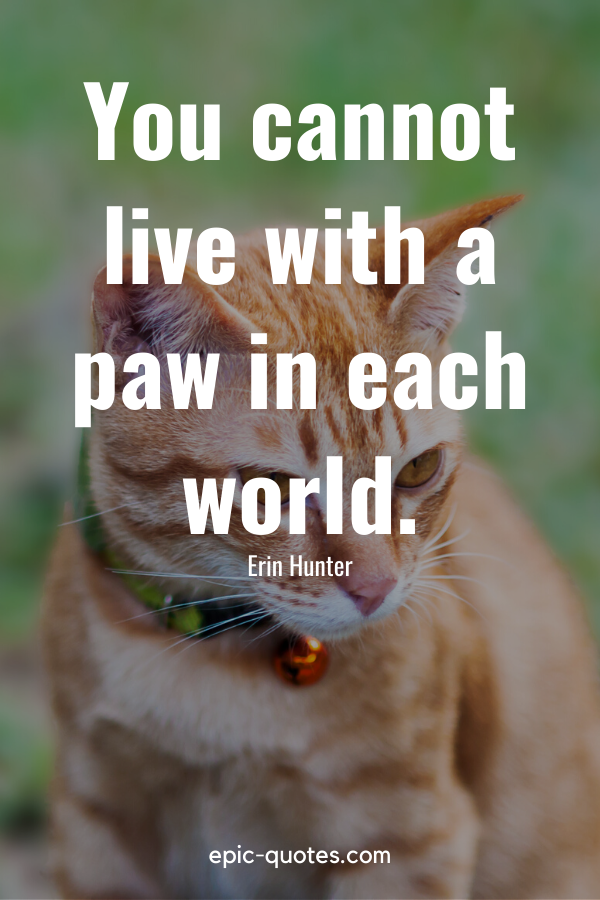 """""""You cannot live with a paw in each world."""" -Erin Hunter"""